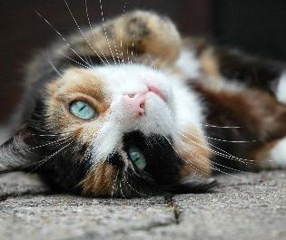 Beispiel Katze